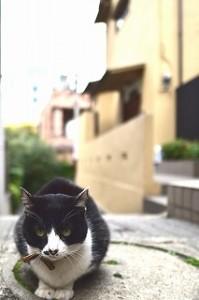 019-1_01カメラ講座告知用猫
