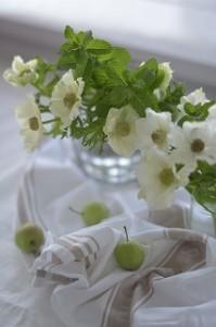 _022_01_022_01カメラ講座告知用フラワーミントと白い花